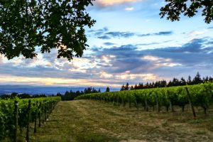 Vista Hills Vineyard in the Dundee Hills AVA, Oregon Wine Country 72 Grape varieties – 725 Wineries – 30,435 planted vineyard acres. 47% of the vineyards in Oregon are certified sustainable.