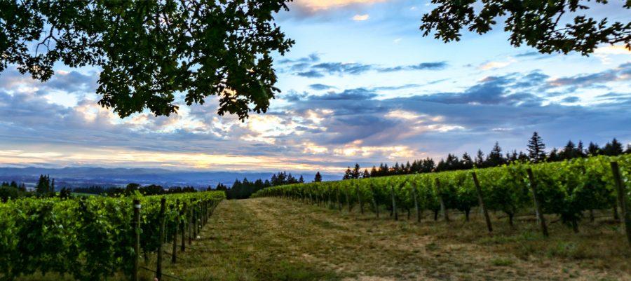 Vista Hills Vineyard in the Dundee Hills AVA, Oregon Wine Country 72 Grape varieties – 725 Wineries – 30,435 planted vineyard acres. 47% of the vineyards in Oregon are certified sustainable.