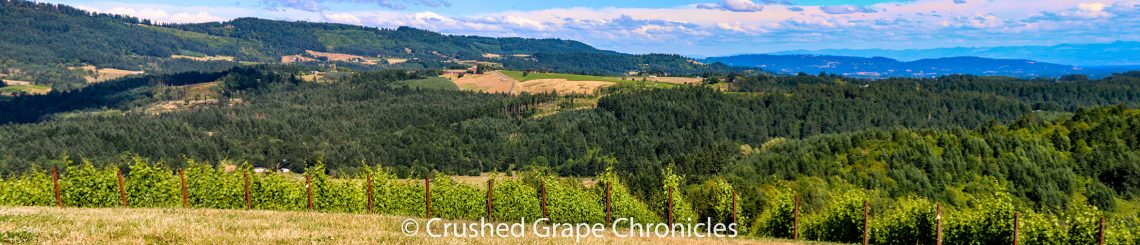 View of Yamhill-Carlton from Fairsing vineyard