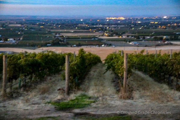 The North Slope at Cadaretta's Southwind Vineyard