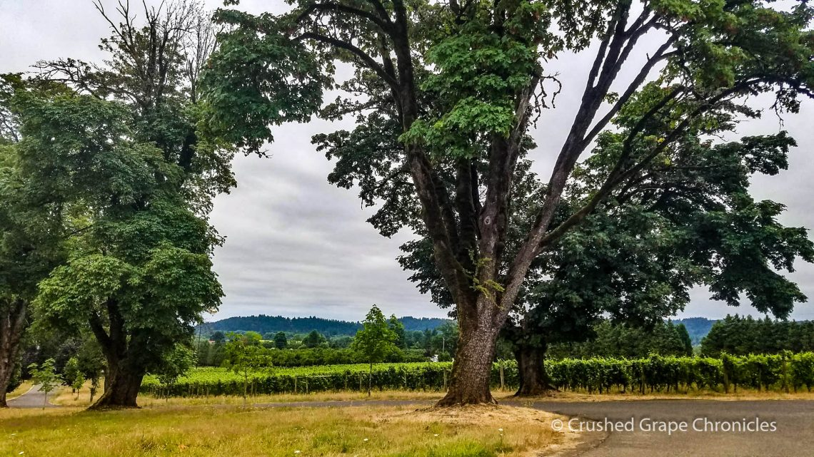 Montinore Vineyards driveway trees