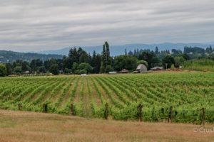 Montinore's Biodynamic Vineyards in the Tualatin Hills AVA, Oregon