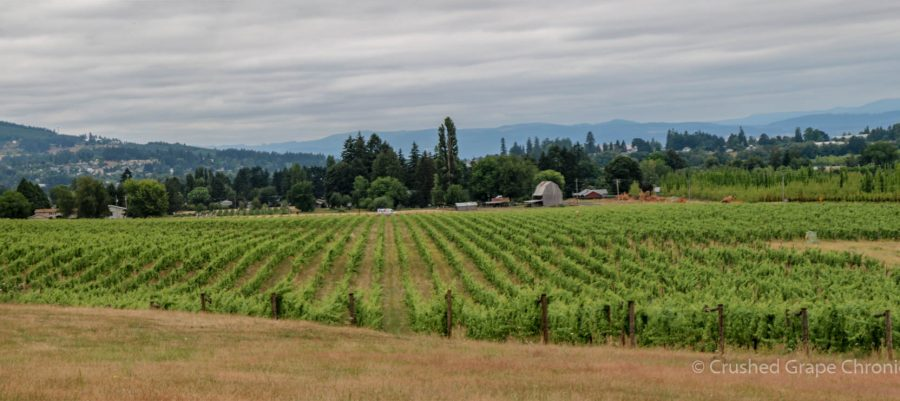 Montinore Vineyards in Oregon Wine Country