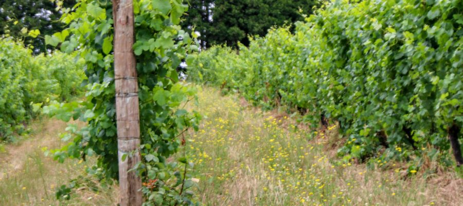 Biodynamics at Montinore Estate