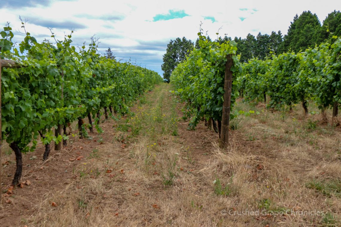 Montinore Vineyards vineyard 2380