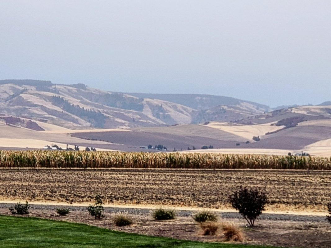 The starkly beautiful hills of Walla Walla as viewed from Doubleback Winery