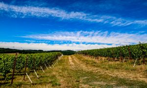 Illahe Vineyard, Vista View