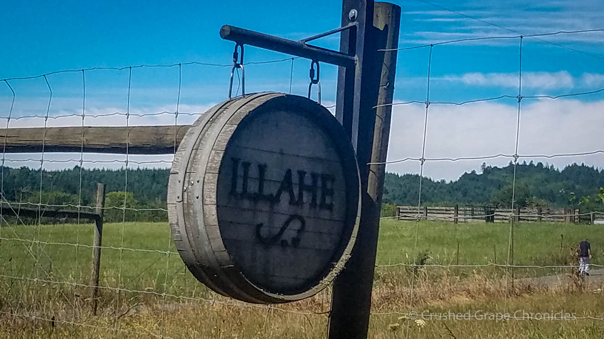 Illahe Vineyard