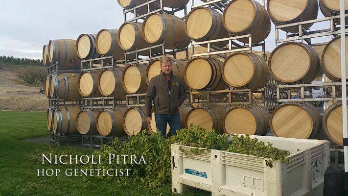 Nicholi Pitra, Hops Geneticist for Hopsteiner