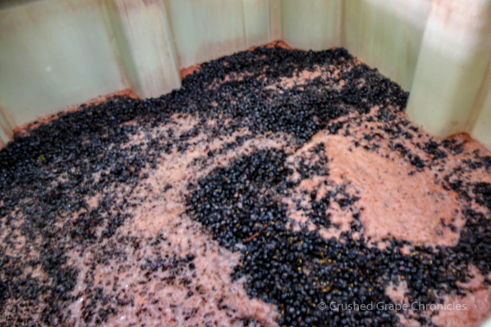 Owen Roe Winery, Grapes in Fermentation Bins
