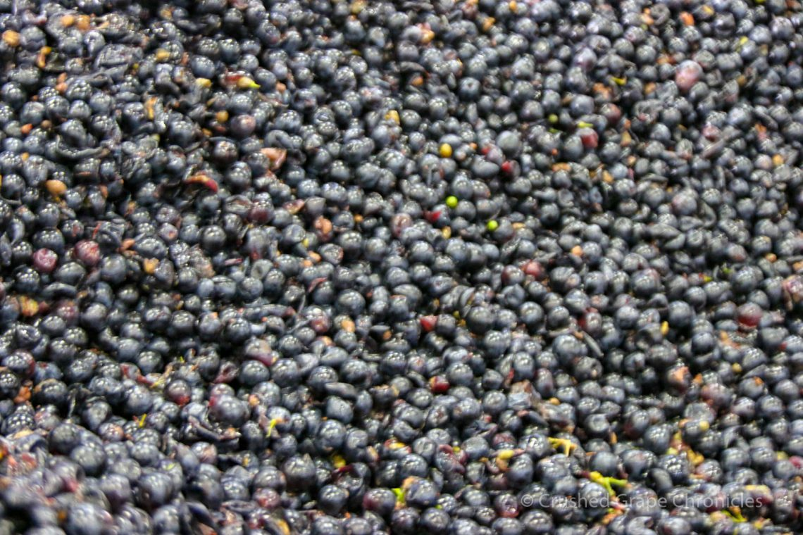 Whole berries in a fermentation bin at Owen Roe Winery in the Yakima Valley