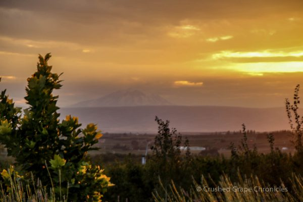 Sunset at Owen Roe in Washington's Yakima Valley
