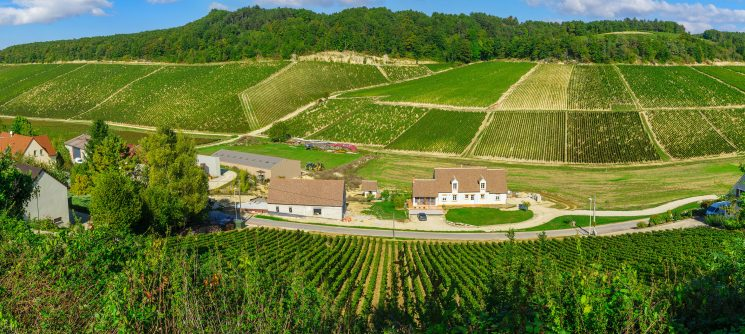 Panoramic view of countryside and vineyards in Chablis