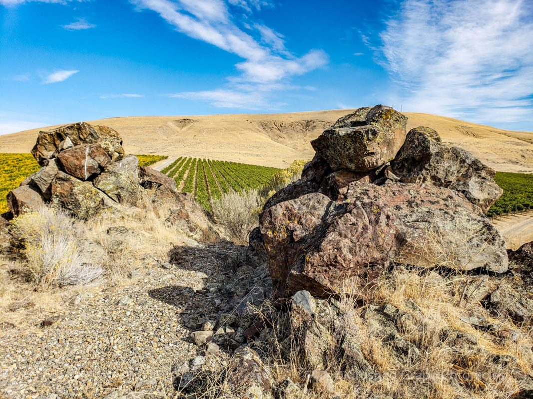 Desert, Vineyard and basalt. In Yakima Valley's Elephant Mountain Vineyard