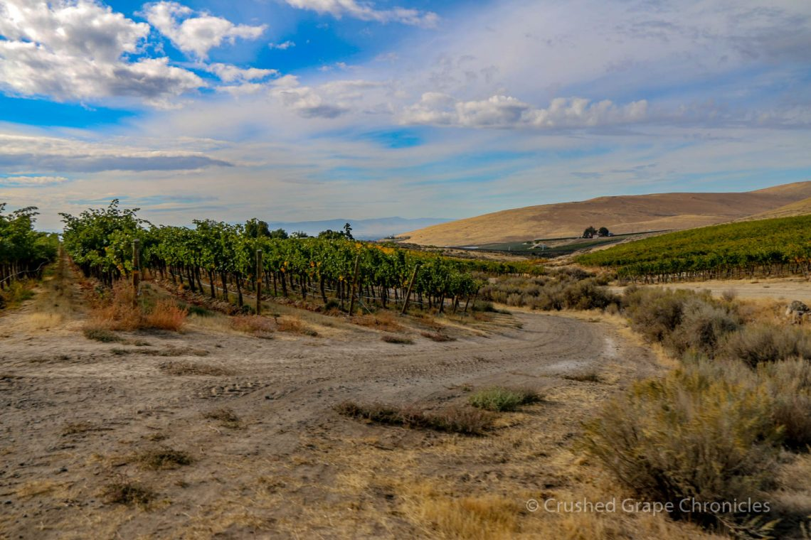 Vineyard View Elephant Mountain.