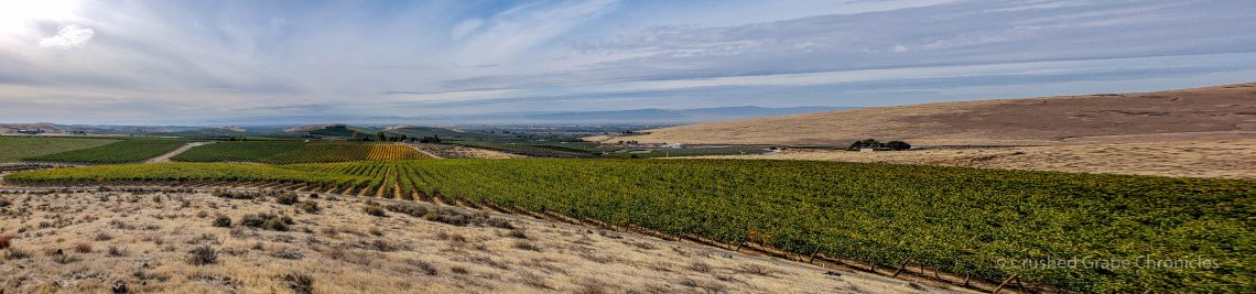 Spectacular panorama of the Yakima Valley from Elephant Mountain Vineyard