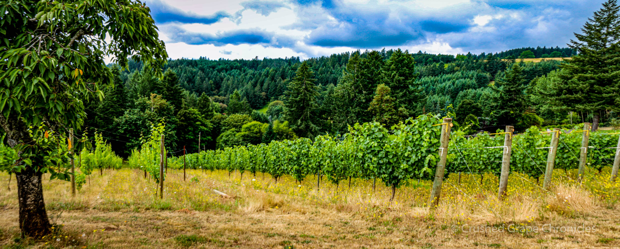 Beckham Vineyard panorama 1