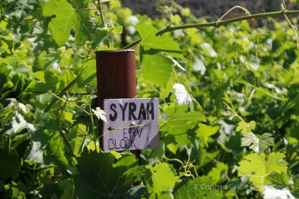 Syrah Block at Cowhorn
