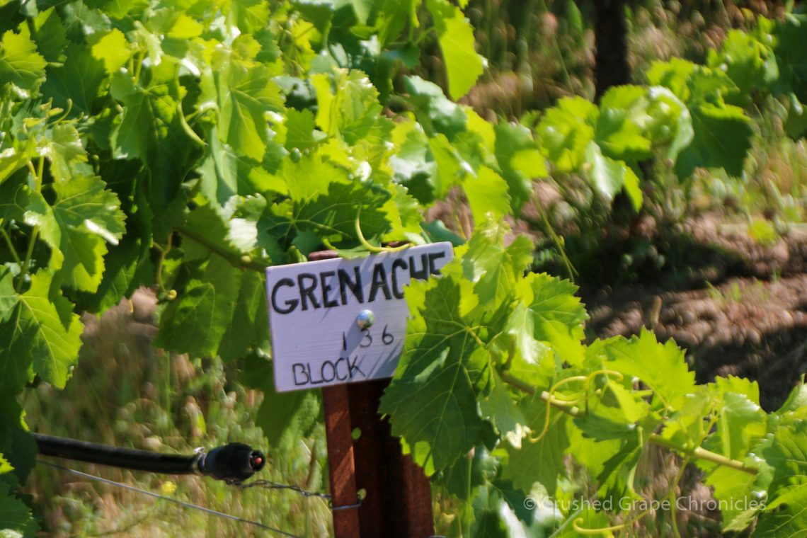 Grenache Block at Cowhorn