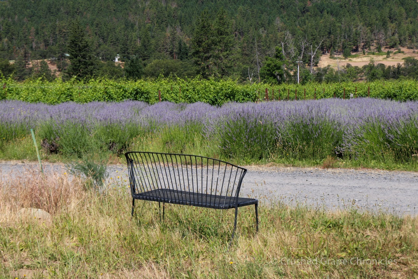 The lavender block and seat for bee viewing at Cowhorn