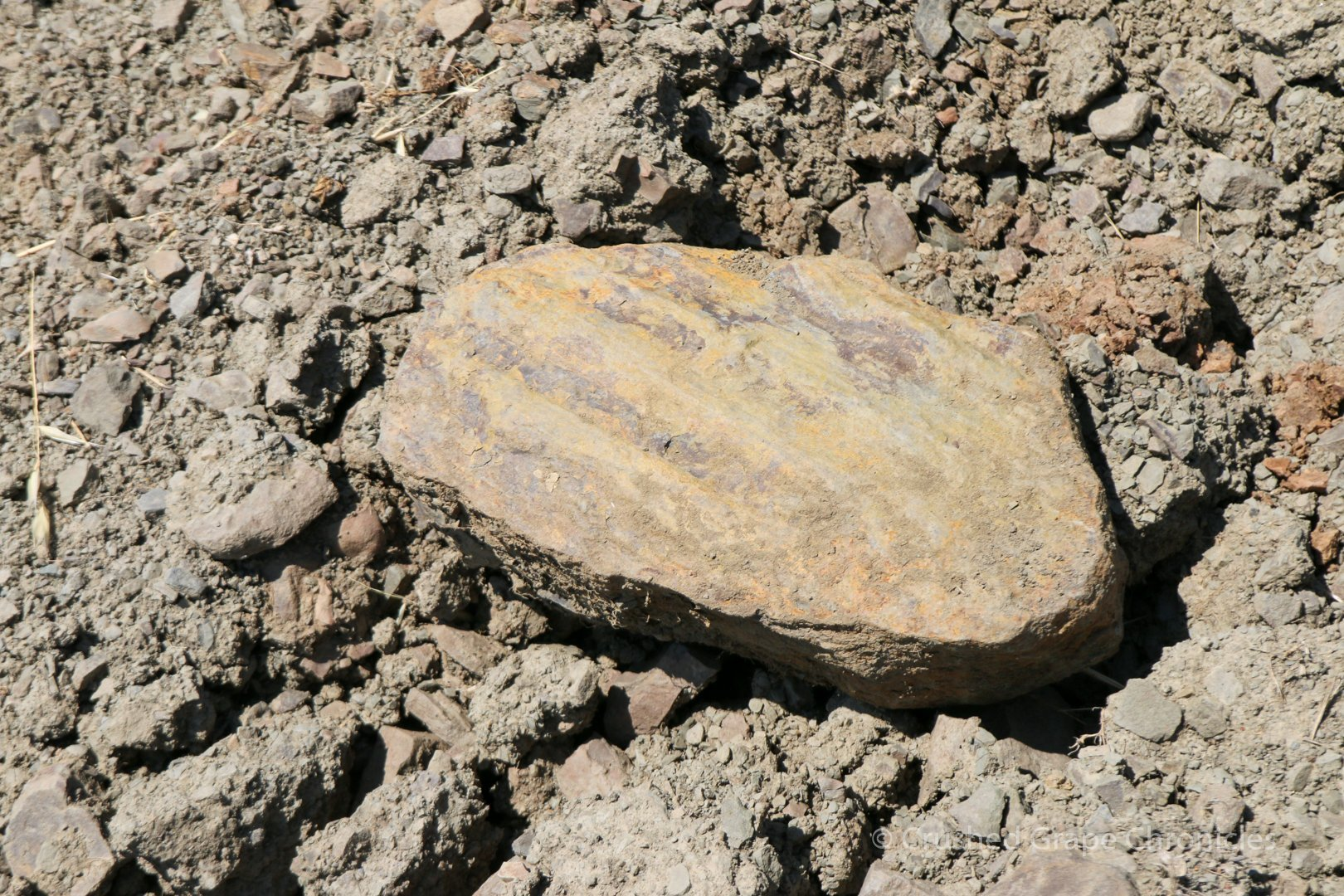 Ancient Marine Shale at the Shale Rock Summit Vineyard at Girardet in Southern Oregon