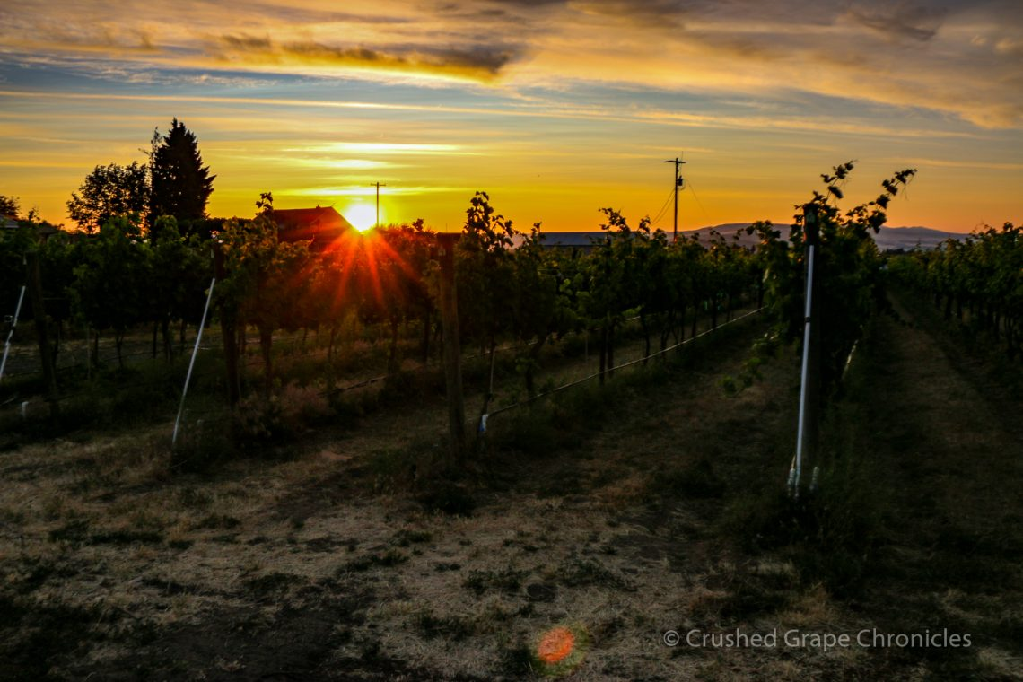Wilridge Vineyard in Naches Heights AVA at Sunrise