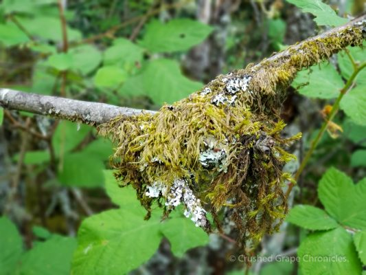 Moss at Bridal Veil Falls on the Oregon side of the Columbia Gorge