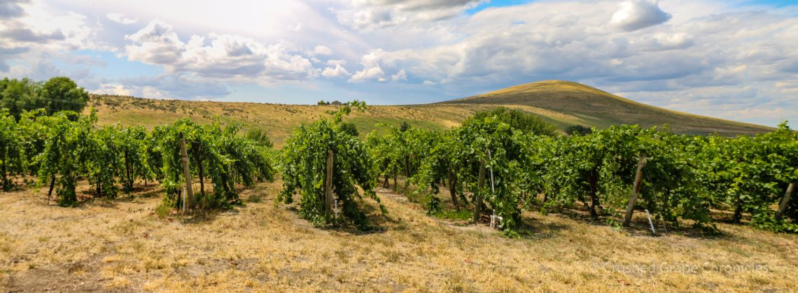 Kitzke Cellars on Candy Ridge in the Yakima Valley AVA