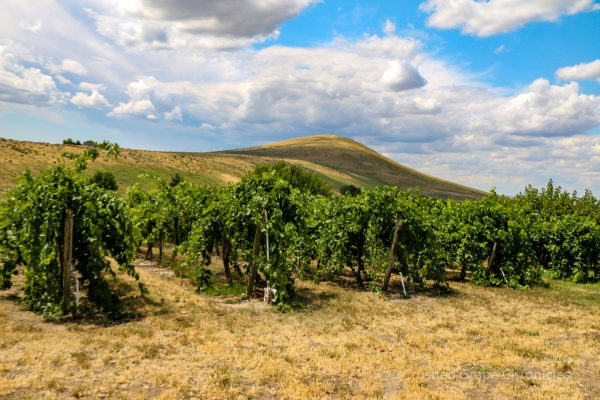 Candy Mountain as seen from Kitzke's Candy Ridge Vineyard