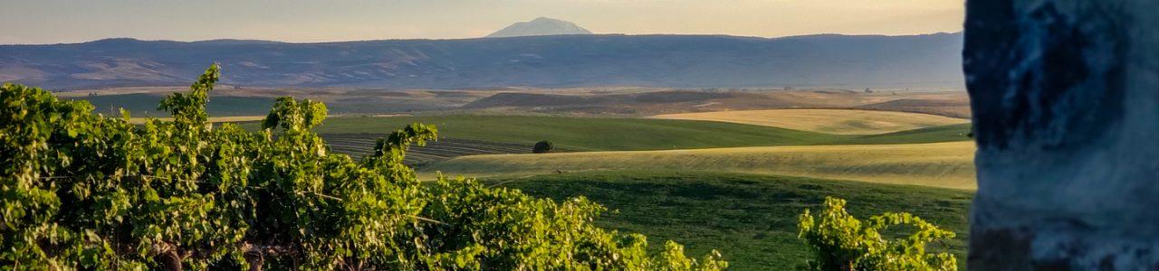 Red Willow Vineyard Yakima Valley