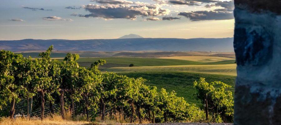 Red Willow Vineyard, Wine Yakima Valley