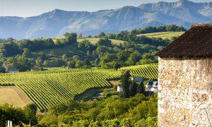 Vineyard, Jurancon, France