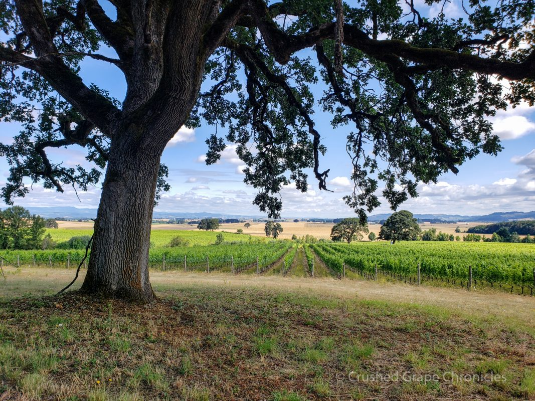 The Scenic Route, View of the Johan Vineyard in the Van Duzer Corridor of Oregon's Willamette Valley