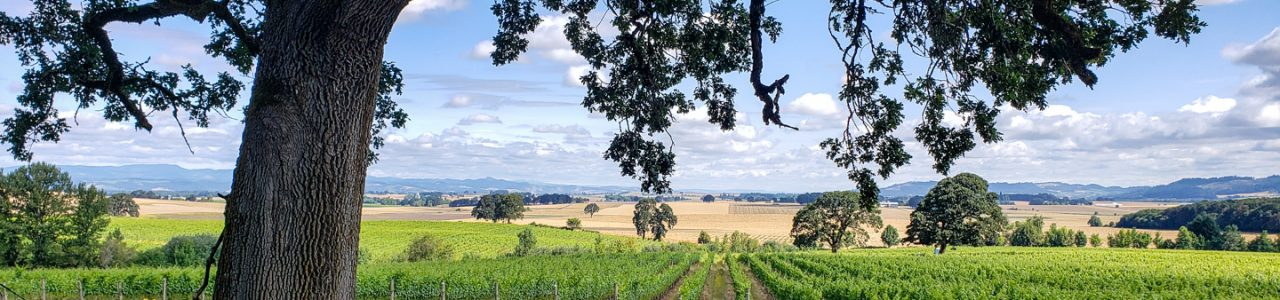 View of the Johan Vineyard in the Van Duzer Corridor of Oregon's Willamette Valley