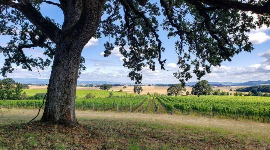The Scenic Route, View of the Johan Vineyard in the Van Duzer Corridor of Oregon's Willamette Valley