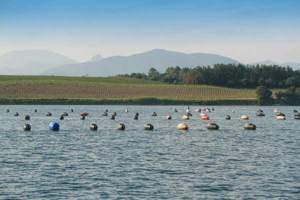 Oyster production in Etang de Diane, the east coast of Corsica,