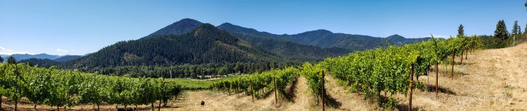 Panorama of the view from Mae's Vineyard