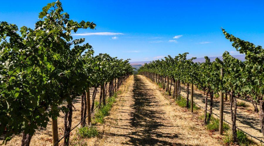 Cote Bonneville Dubrul Vineyard