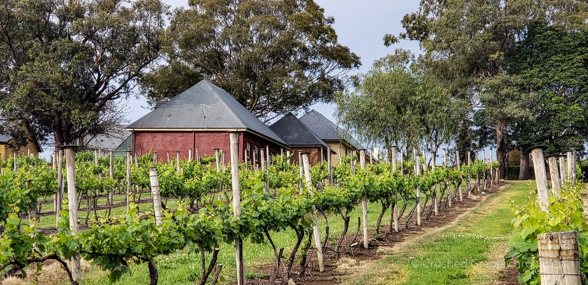 The lower vineyards at Coolangatta Estate Shoalhaven Coast New South Wales AustraliaNSW Australia