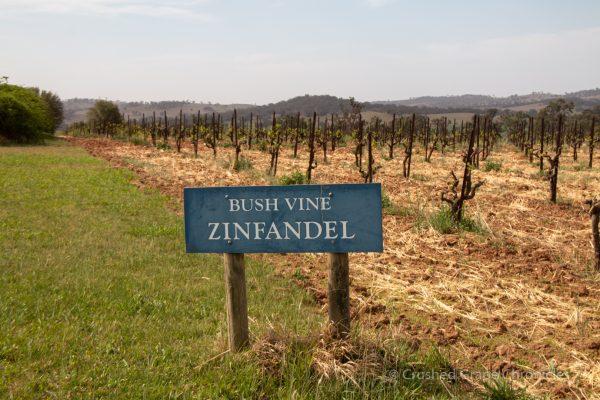 Lowe Wines in Mudgee Zinfandel Vines bush trained