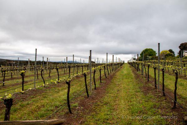 Tertini Vineyard, Southern Highlands Australia