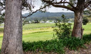 coolangatta Estate20191003 0636