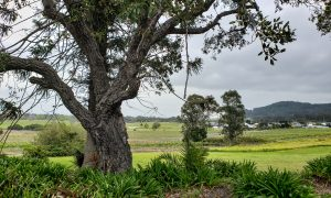 coolangatta Estate20191003 0641