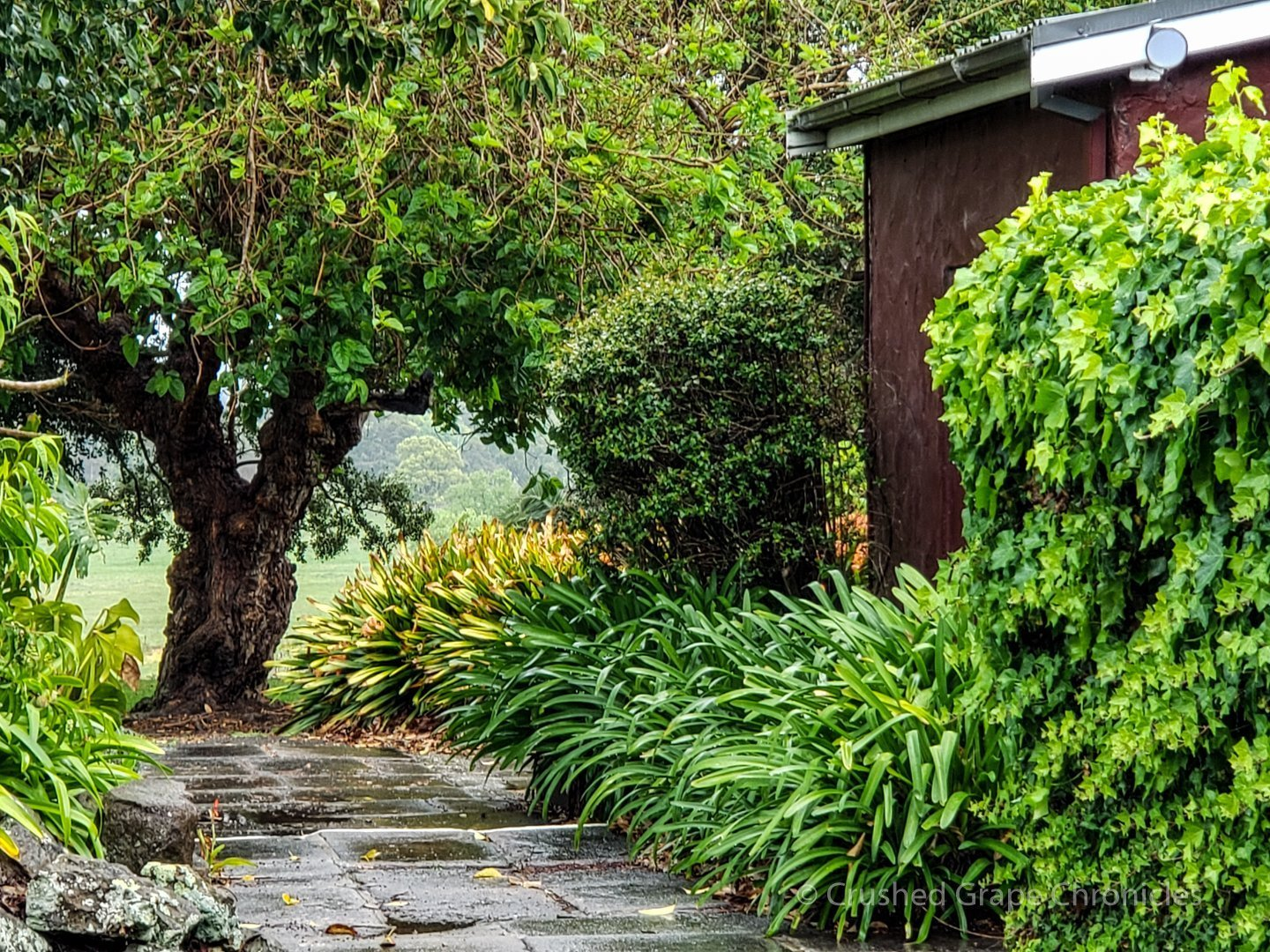 Lush greenery at Coolangatta Estate Shoalhaven Coast New South Wales Australia