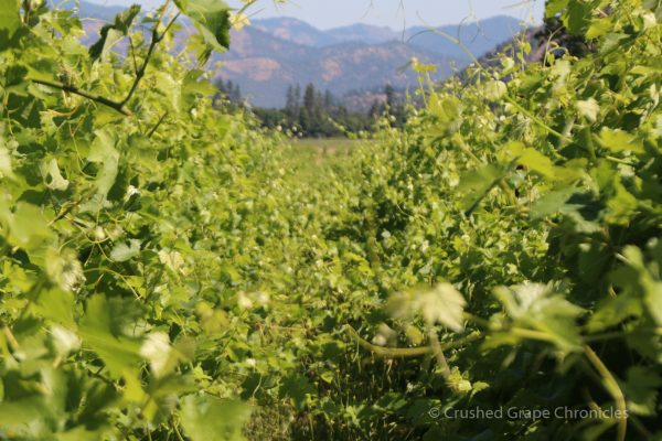 Cowhorn Biodynamic Vineyard in Applegate Valley Oregon