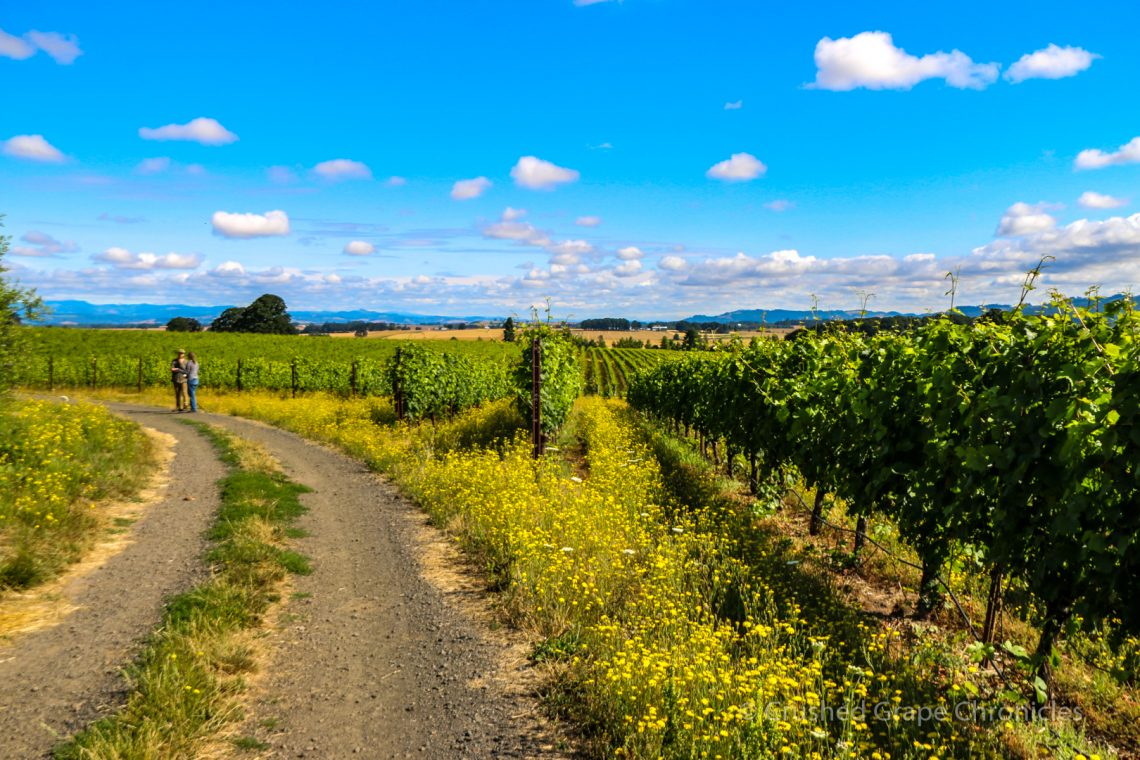 The vineyard road at Johan Vineyards in the Willamette Valley's Van Duzer Corridor AVA