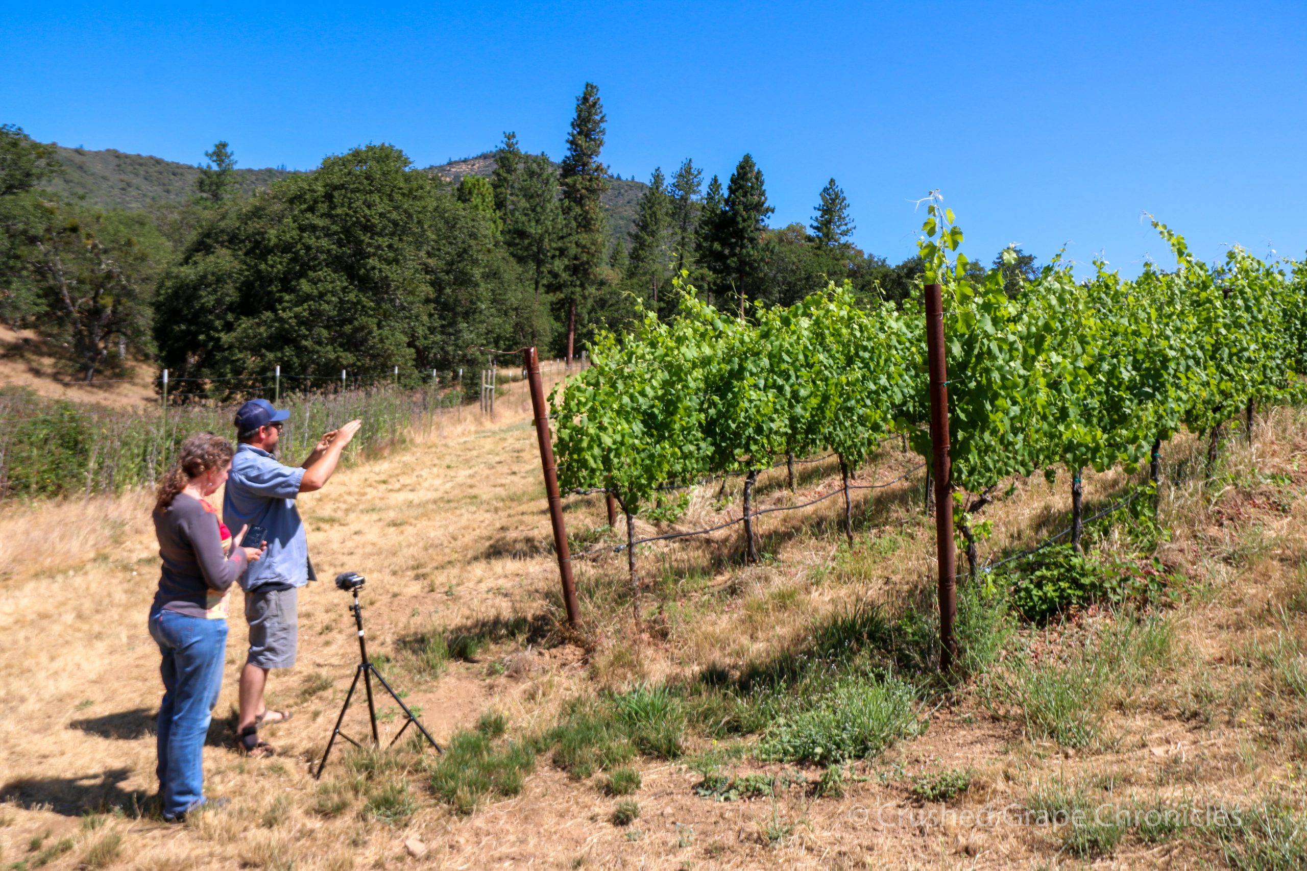 Herb showing me around the Mae's Vineyard at Quady North in Southern Oregon's Applegate Valley AVA