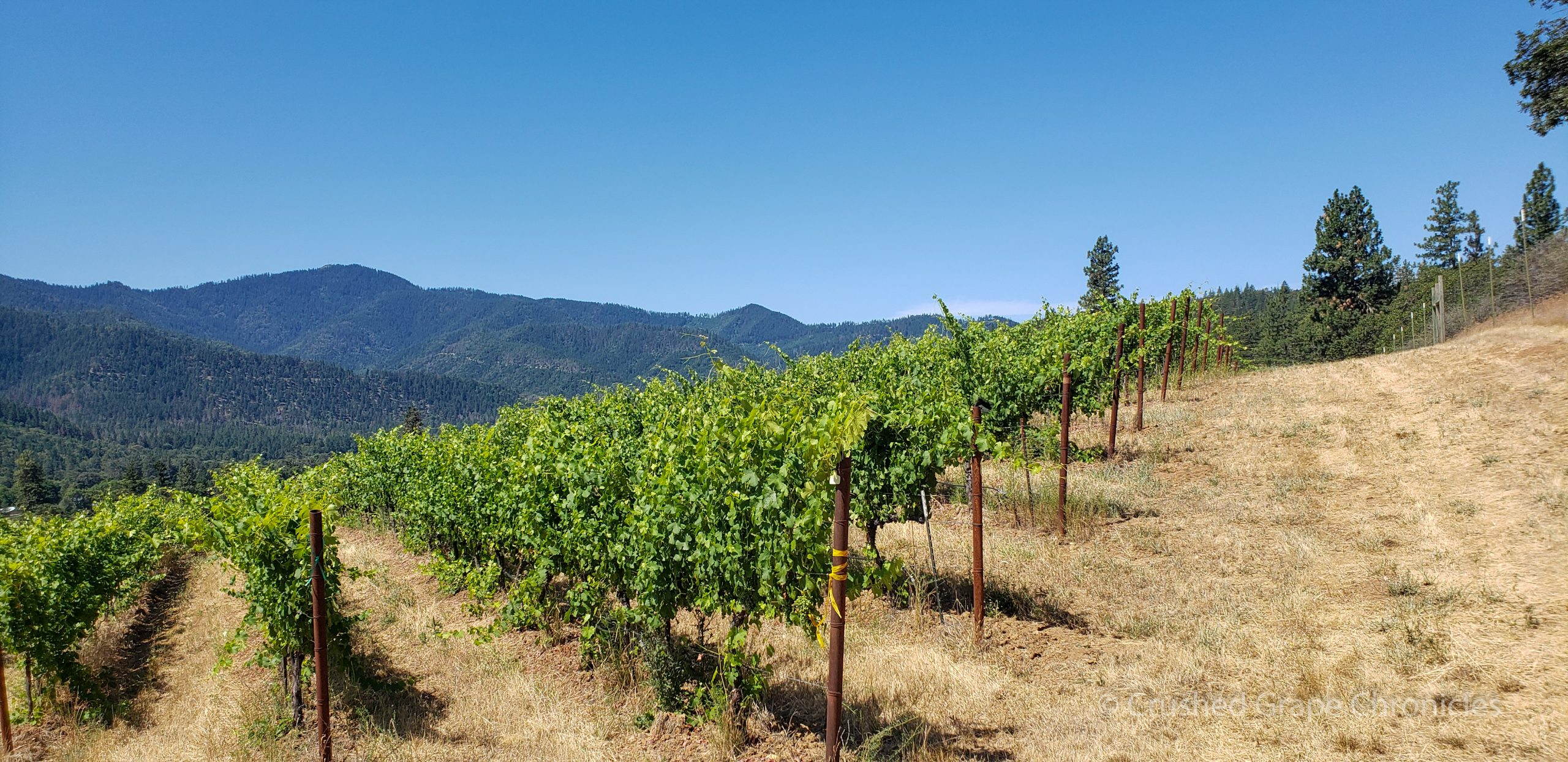 Vines and a view at Quady North's Mae's Vineyard in the Applegate Valley