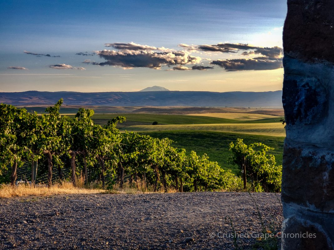 Red Willow Vineyard Yakima Valley AVA Mt. Adams in the Distance