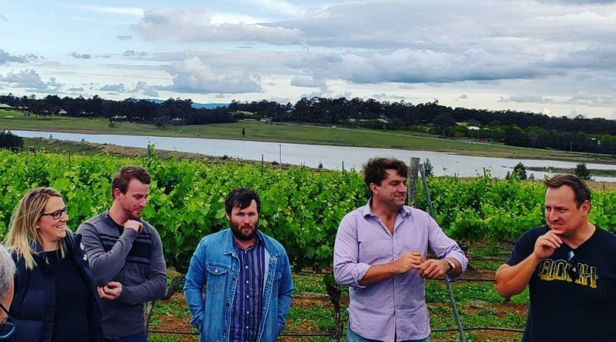 In the vineyard with Semillon and Oysters